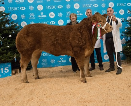Overall Champion & Champion Heifer - Miss Wales - Mr D Thomas