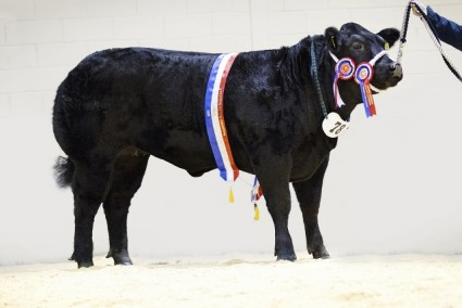 Price Tag - Overall Champion
