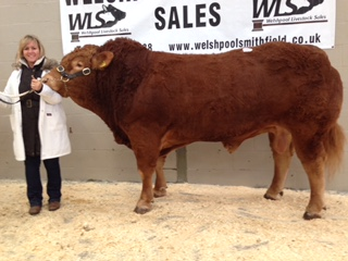 Cowin Jagermeister 4,600gns.