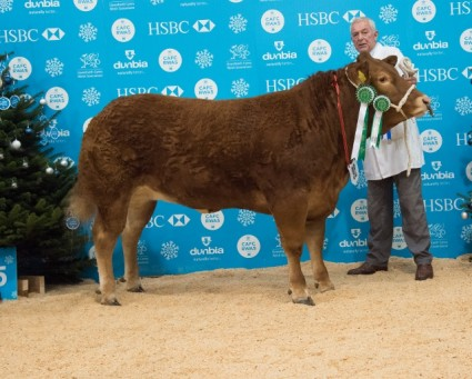 Reserve Overall & Reserve Heifer - Here Come Trouble - P&S Sellers