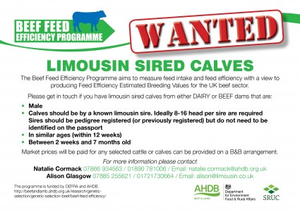 Sired Calves Wanted