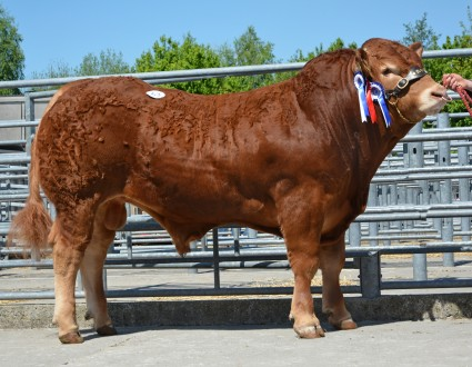 Whiskey Jazee 8300gns