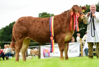 Overall Supreme Champion Shanhill Jodie