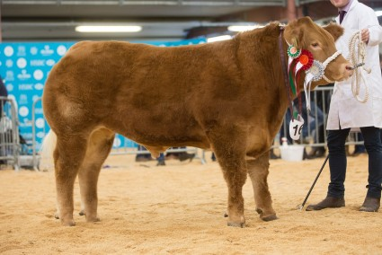 Tip Top Steer & Overall Champion WWF 2016