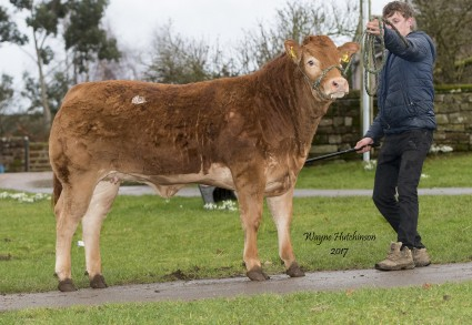 Barons Maisey - 5800gns