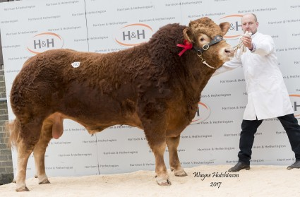 Withersdale Levi - 10,000gns