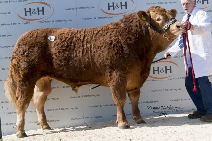 Ampertaine Lawson - 18,000gns