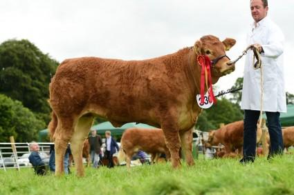 Junior Champion Deerpark Maisie