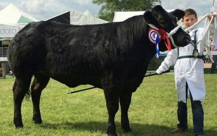 Kile Diamond Champion Young Beef Handler 2017