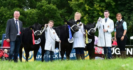 NI Young Limousin Breeders Team