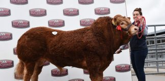 Uptonley Nobby 4,800gns