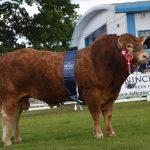 Redpaths Nobleman – M&S Beef Breeder Champion